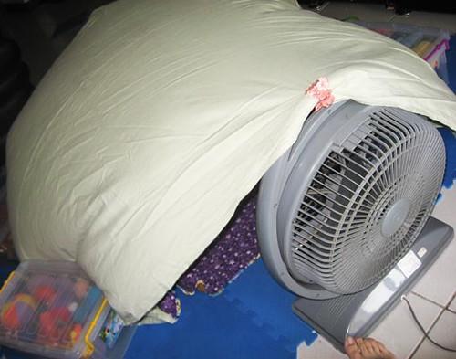 fan tent