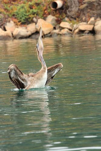 Taken in Morro Bay, CA.