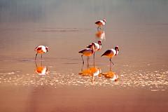 Passende Vögel