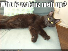 Hizzy as a lolcat