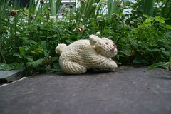 2008-07-10-FO-bunny2