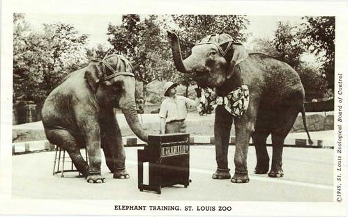 Elephant Training 2.jpg