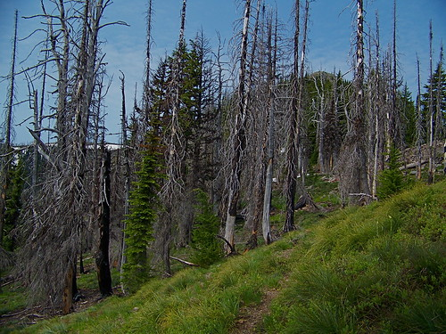 Trail 385 to Penrose Peak