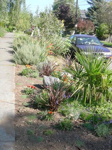 Super awesome street garden