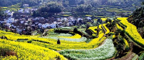 Jiangling - Photo : shenxy