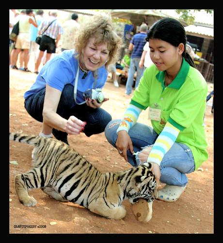 TIGER TEMPLE, KANCANABURI THAILAND 2/08