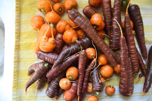 The carrot harvest