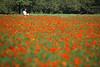 Photo:Flower Field By