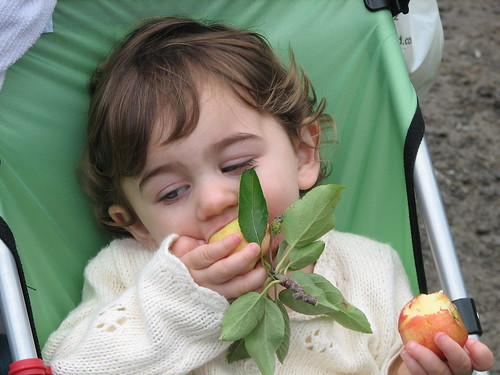 Apple Orchard 076