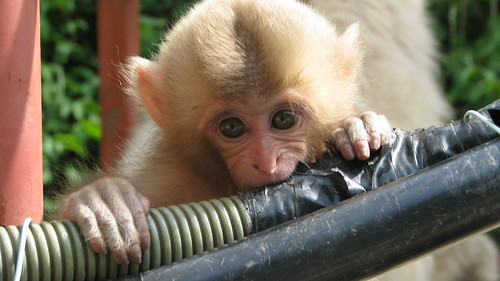60 - Curious Monkey - 20080618