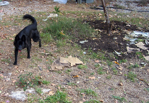 a dog and her destruction