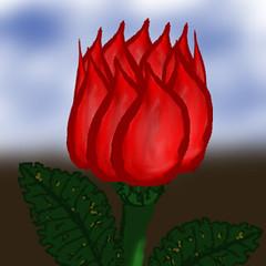 rose-010