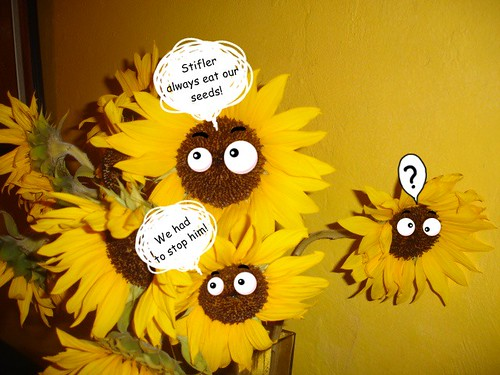 Sunflower answers