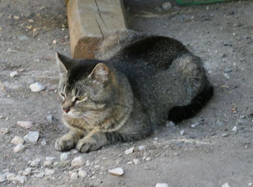 Momcat