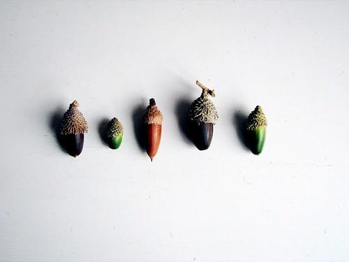 acorn love