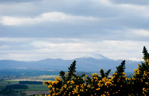 Mountain & Gorse