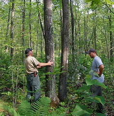Private forestry help
