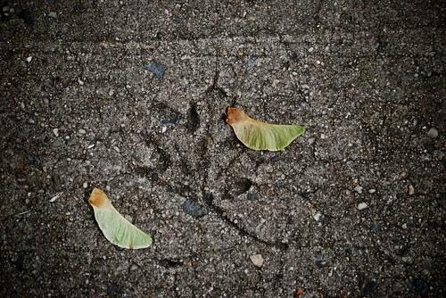 leaf sidewalk imprint