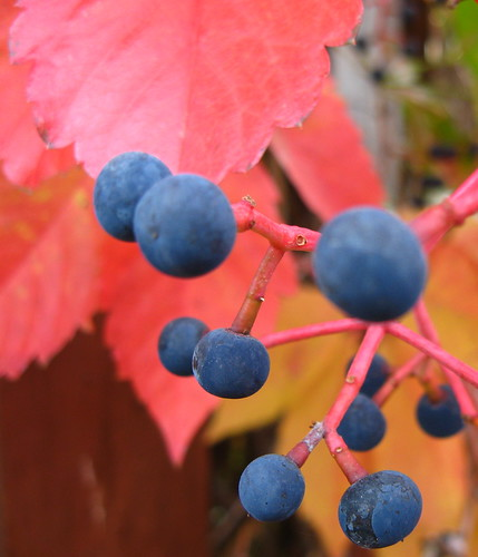 Berry fractal