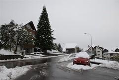 Der erste Schnee 2008-008