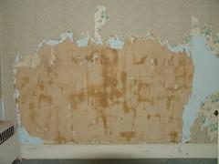 Scraping wallpaper