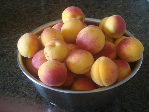 apricot 3 杏桃