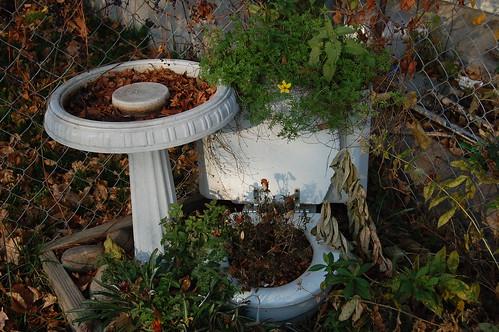 Toilet and birdbath