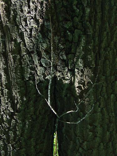 birth of a tree