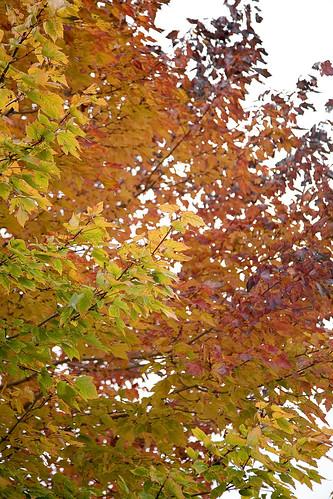 Leaves 101108