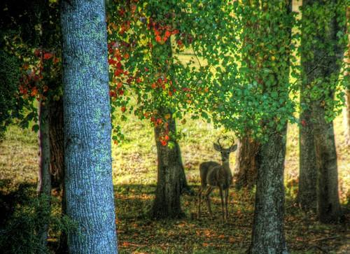 Fantasyland Deer