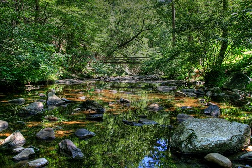 Reflecting Summer on the Creek
