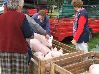 DSCF6031 dierenmarkt