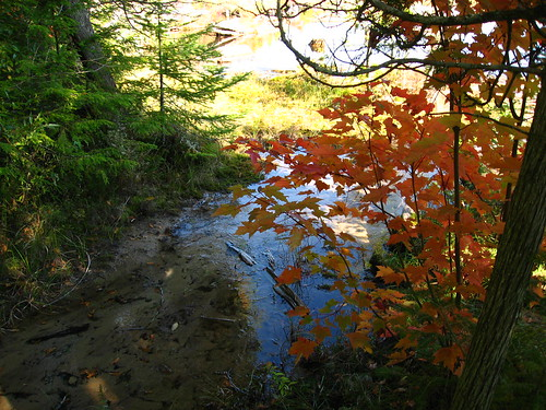A glimpse of the Au Sable River at Iargo Springs