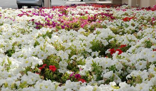 Bunga Jalanan