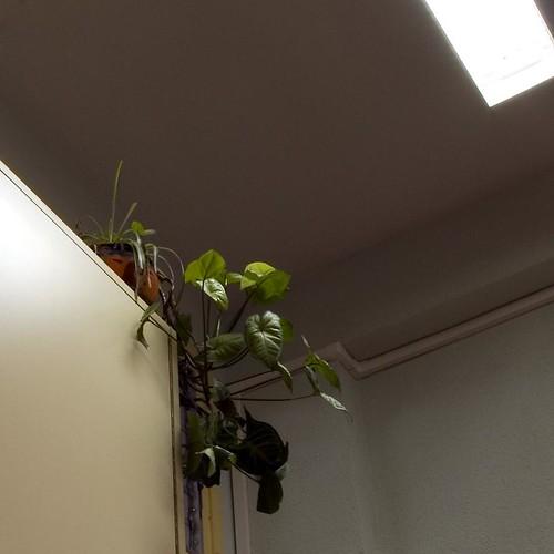 planta sobre armario15x15