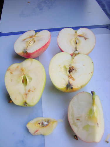 Pest-damaged apples