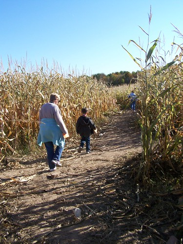 Walking the corn maze