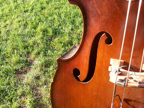 bluegrass cello