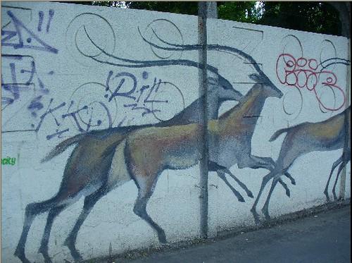 Antylopa na murze wrocławskiego zoo