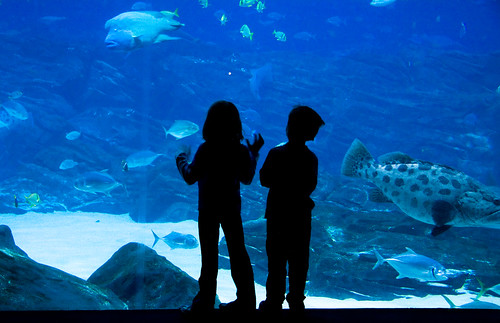 Aquarium Tank by LollyKnit, on Flickr