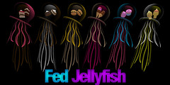 Snack Fed Jellyfish