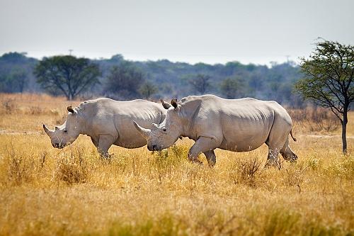 sized_Botswana_0127a3