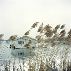 (super ape) Tags: house lake tlr ice grass rollei reeds island grey boat bokeh pennsylvania houseboat overcast pa offseason erie vb presqueisle gossen expiredfilm rolleicord fujinps160 lunapro