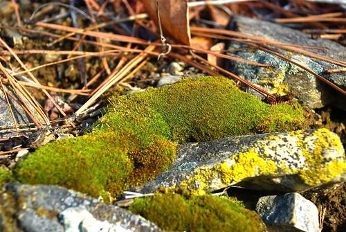 February moss
