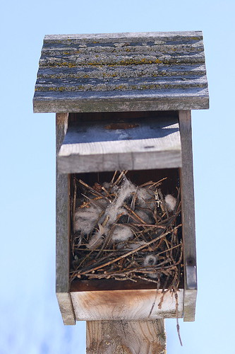 Wren nest in birdhouse