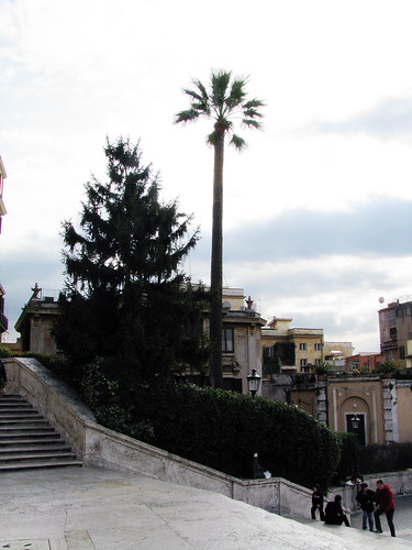 Palm at the Spanish Steps