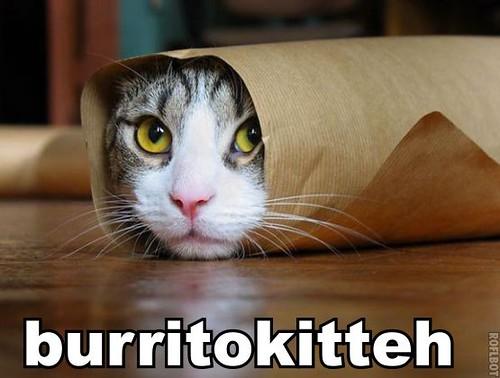 burritokitteh