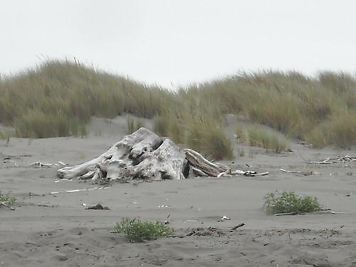 A huge driftwood stump.
