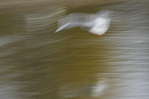 Long exposure bird photograhy