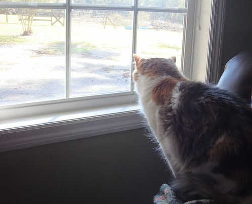 Keeping An Eye Out
